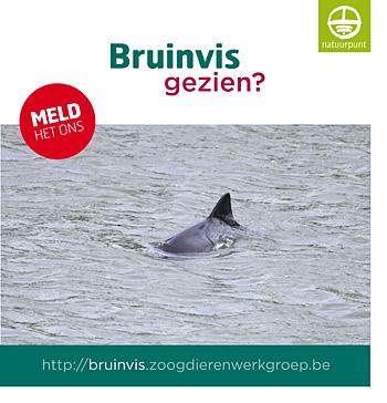 bruinvis